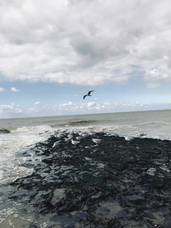 Meeuwen bij zee -