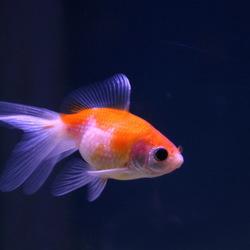 aquarium -2-