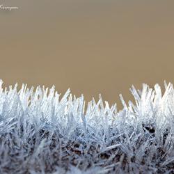 Frosty Needles