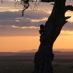 Luipaard Kenia 2006