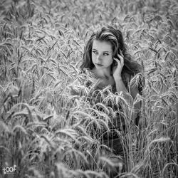 In a cornfield...