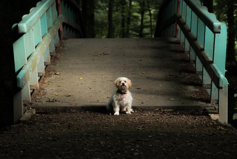Hondje in het bos - Dit topmodel zat precies mooi in het natuurlijk licht geduldig te wachten tot ik klaar was!