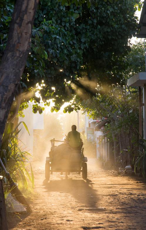 Afternoon light -