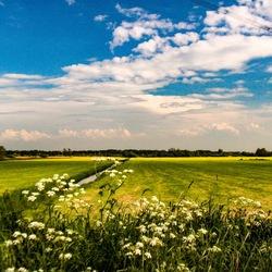 Weidsheid in NL