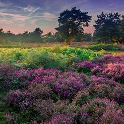 Hoogmoer Heide