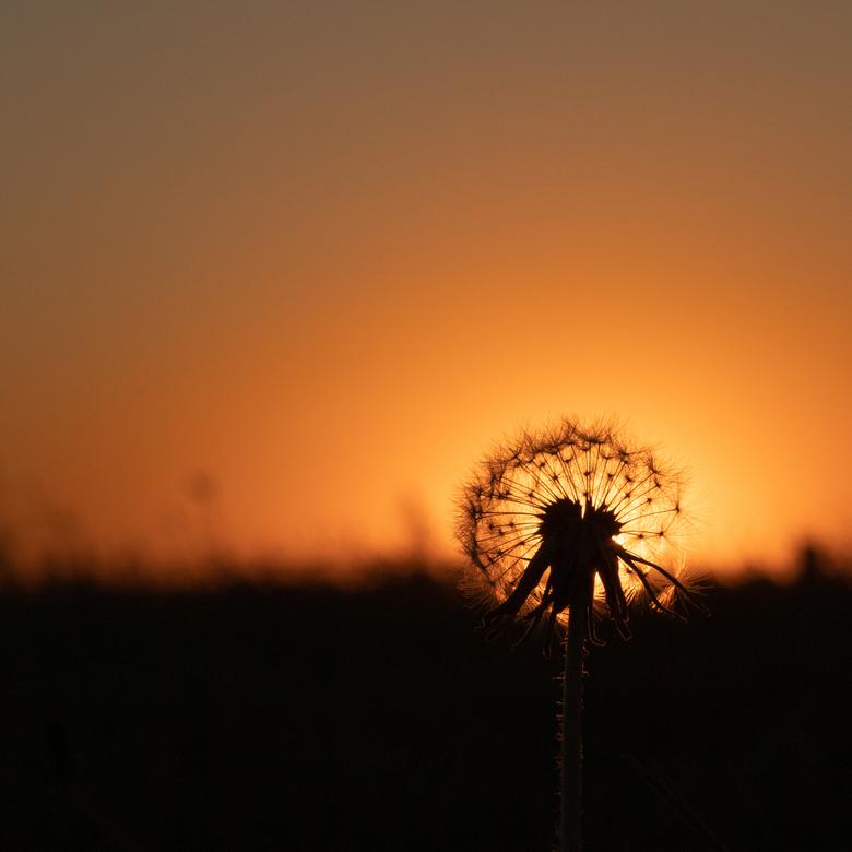 oranje boven - mooie avonden