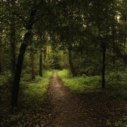 sfeervol wandelen in ons bos 2067