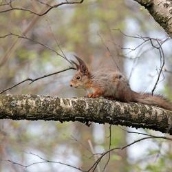 Squirrel #3
