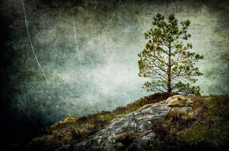 Another Lonely Tree -