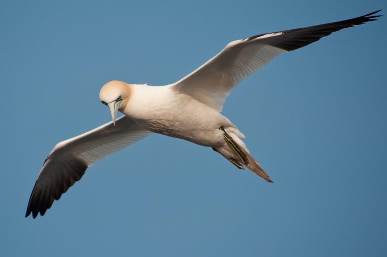 Flying high - Jan van Gent in vlucht