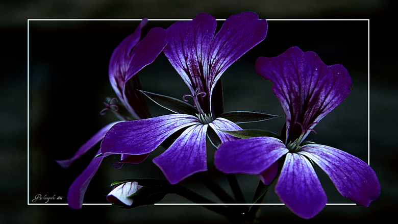 flowers... - ...