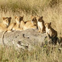 Familieportret in Tanzania