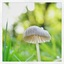 Minipaddenstoel