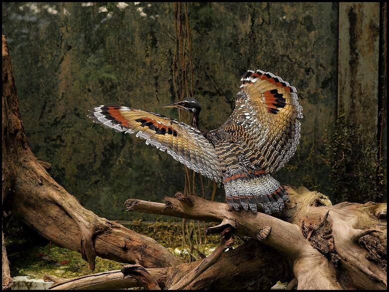 vogel vleugels gespreid