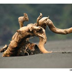 Verdrijfhoute Olifant