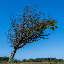 Aangetast door wind