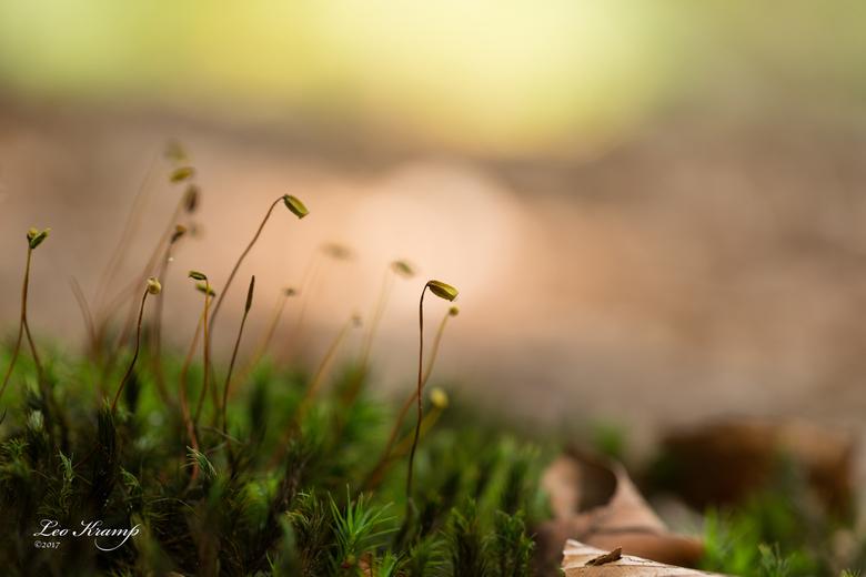 Mos op mos - Nationaal park de Hoge Veluwe