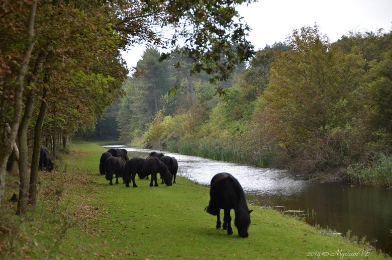 Natuurgebied Oranjezon - Een deel van de kleinste wandeling daar is betreden op eigen risico ...<br /> Zondag jl. zagen we deze pony&#039;s ...