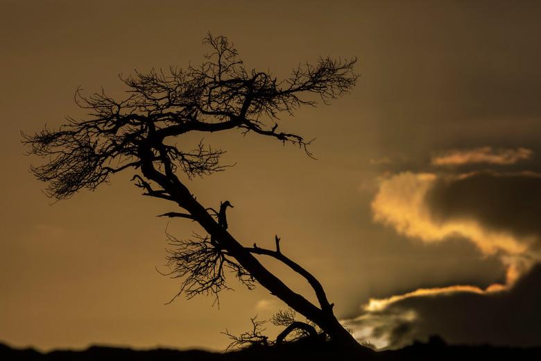Silhouet tijdens zonsondergang -