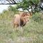 De koning in Zuid Afrika