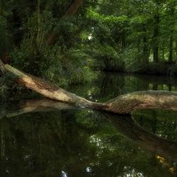 DNA van het bos