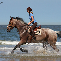 Rennend paard in de zee