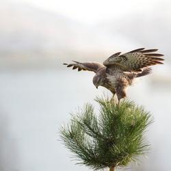 Easy Landing