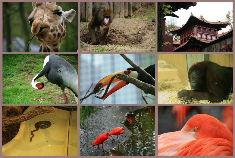Dagje Ouwehands dierenpark 2