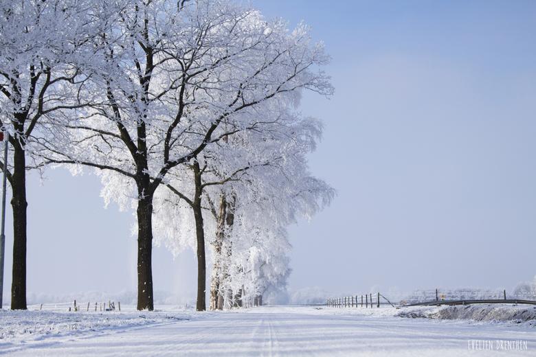 Winter Wonderland -