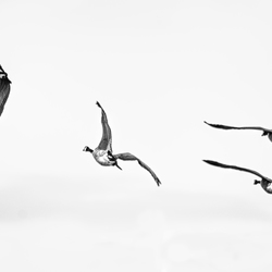 The birds have flown.