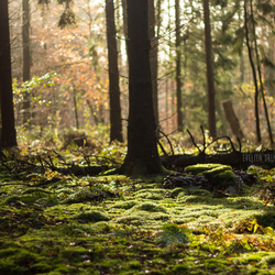 Forest Morning