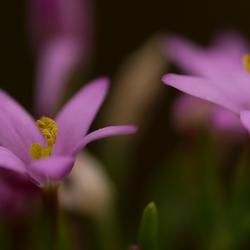 Mooie paarse bloem