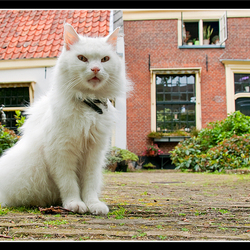 Haarlem 06
