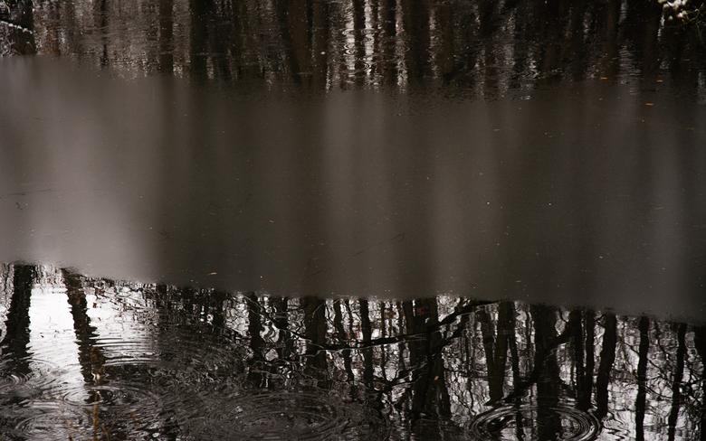 Een beetje winter 1 - Natuurreservaat Molsbroek Lokeren - België