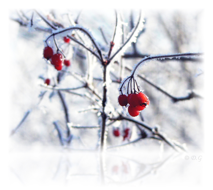 Cold Red -