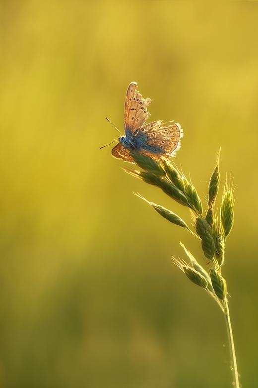Nature can be rough - iedereen bedankt voor alle reactie op mijn vorige upload.<br /> mvg.Remco