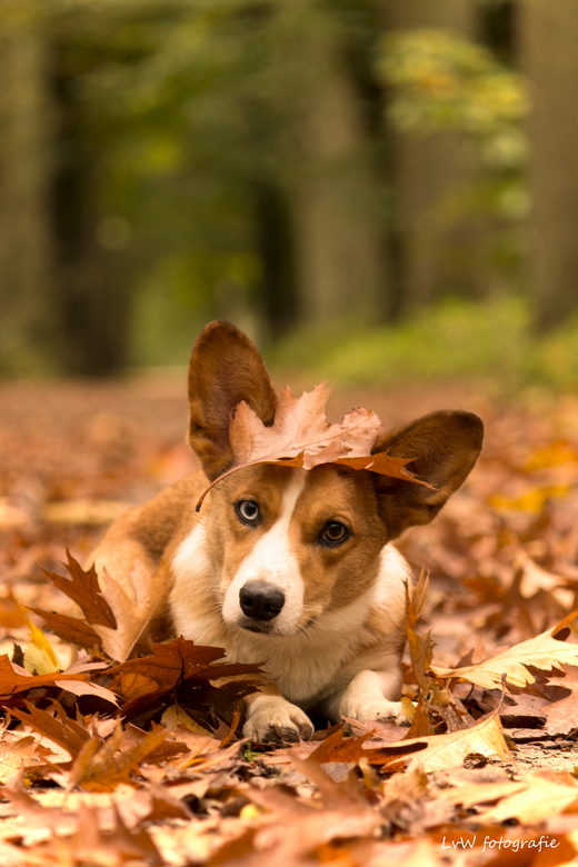 Camouflage hond -