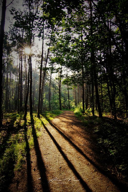 Shadows  - Mooi schaduwspel in bossen van Erp