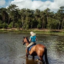Horse ride
