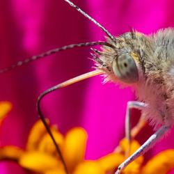 Goddelijke Nectar
