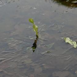 eenzame bladeren op het ijs