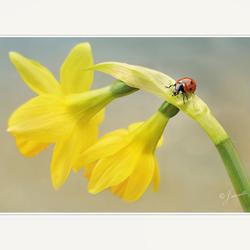 Kleine voorjaarsbode.............