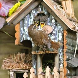 Winterkoninkje voedt kleintjes in nestje