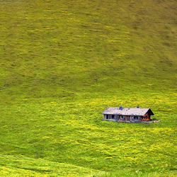 Home alone......................