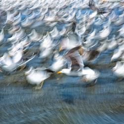 beachbirds 5/6