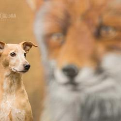 Foxy lady...