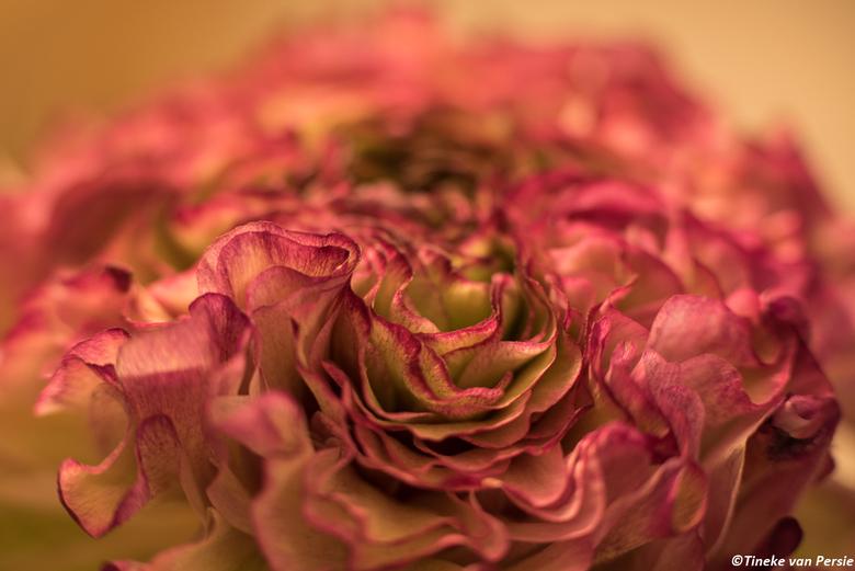 ontelbare bloemblaadjes