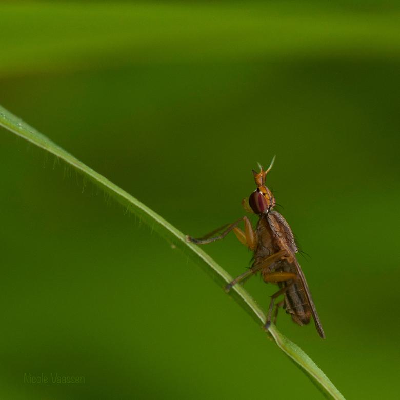 vlieg - Blijven toch mooie beestjes die vliegen.<br /> Badankt voor al jullie reacties op de laatste foto.