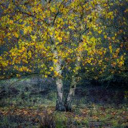 Herfst blaadjes