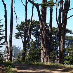 Golden Gate , SF California